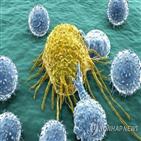 암세포,세포,면역계,조절,환자