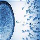 정자,코로나,세포,남성,결과,연구