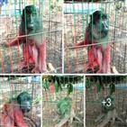 원숭이,페인트,야생동물,벌금