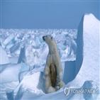 북극곰,사우나,오두막