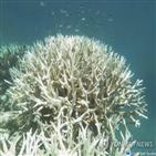 산호,산호초,결과,감소