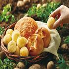 강원도,감자,제품,파리바게뜨,출시