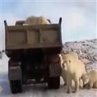 북극곰,트럭,촬영,얼음
