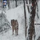 호랑이,중국,유입,흔적
