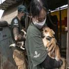 농장,구조,한국,개고기,금지