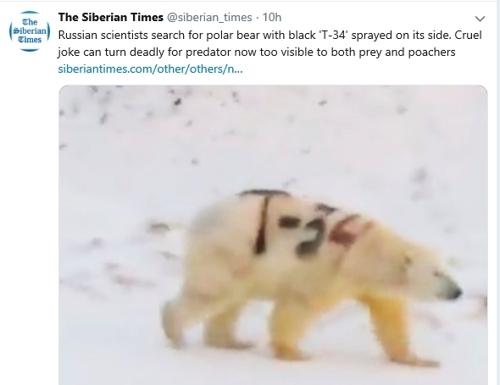 """멸종위기 북극곰에 새겨진 軍전차 이름…""""누가 이런 끔찍한 일을"""""""