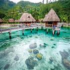 타히티,바닐라,타하,바다,세계,진주,자연,사람,폴리네시아,프랑스령