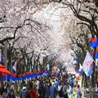 벚꽃,전국,진달래,상춘객,봄꽃,축제,만개