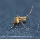 모기,일본뇌염,집모기,연구원