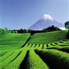 후지산,시즈오카,코스,일본,녹차,온천,어묵,이즈,등산,지역
