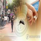 일본뇌염,모기,매개모기,주의