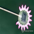 유물,연꽃,궁남지,사랑,선화공주,대전시립박물관,공개