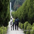 이즈카향나무,향나무,교수,일본,이토,달성공원,기념식수,히로부미