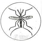 모기,발견,광주,일본뇌염