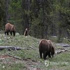 멸종위기종,보호,동물,지정,환경단체