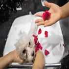 반려동물,중국,강아지,서비스,시장,증가