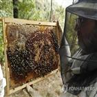 백신,꽃가루,곤충,꿀벌,프라이탁,연구팀,개발