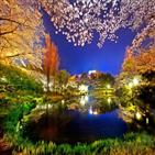 마을,벚꽃,경주,산수유,명소,봄꽃,안동