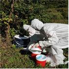 일본뇌염,모기,집모기,조사,밀도