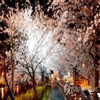 벚꽃,아시아,축제,모악산,푸드,페스티벌,컬처,전북,연분홍빛,전주
