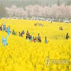 수국,유채꽃,축제,프로그램,튤립,상효원,주말,제주