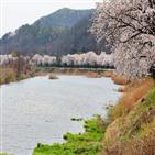 벚꽃,위례,천안,벚꽃축제,공연