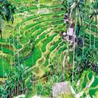 우붓,발리,음식,초록,인도네시아,여행,마음,사람,작품,바다