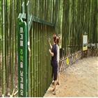 낙서,대나무,십리대숲,설치,순찰