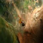 거미,폭풍,개체군,열대성,연구팀,공격성
