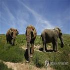 동물원,코끼리,아프리카,야생,거래,금지