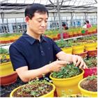 네잎클로버,상품,생산,사장,농장,과천,행운