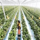 스마트팜,농식품부,위해,혁신밸리,조성,추진