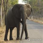 코끼리,공원,짐바브웨,가뭄,짐파크,정부