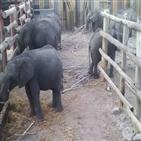 코끼리,중국,짐바브웨,국립공원