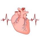 심방세동,발기부전,연구팀,남성,연구결과,부정맥