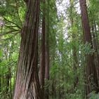 종이,나무,사용,산업,업계,이산화탄소,환경,위해,생산,원료