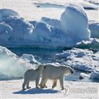 얼음,북극,그린란드,해수면,해빙,원주민,바다,상승