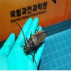 장수하늘소,성충,애벌레,과천과학관