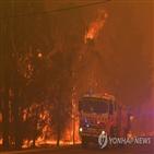 산불,당국,지역,상황,불길,행사,시드니,호주,취소,고립