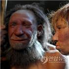 유전자,네안데르탈인,아프리카인,유럽인,동아시아인,연구