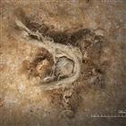 네안데르탈인,발굴,천연,섬유