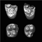 원숭이,화석,어금니,아프리카,대서양,발굴