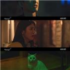 홍조,애니멀,김솔아,고양이