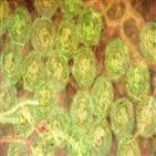신종,세포,감염,연구,코로나,비강,코로나바이러스,가능성