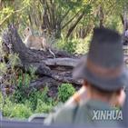 관광,밀렵,야생동물,아프리카,코뿔소,코로나19,수입,보호,증가,여행