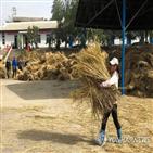 38노스,북한,식량,수확량,시장,올해,코로나19