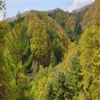 산림청,선정,명품숲,국유림,활성화