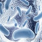 콜레스테롤,세균,유전자,분해,인간,수치