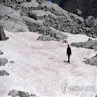 빙하,조류,과학계,분홍색