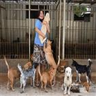 개고기,구조,마리,인도네시아,수사,코로나19